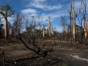 1200px-Slash_and_Burn_Agriculture,_Morondava,_Madagascar